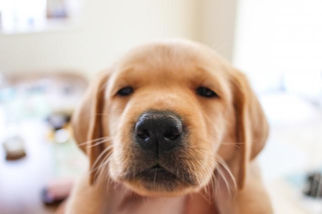 寝ぼけ犬「英語の発音とリスニングは関係あるの?」という質問は寝言