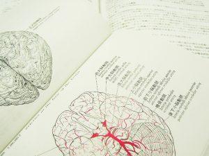 英語の音を聞き取る練習とは、英語の音を処理する脳回路を作り上げること