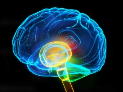 脳画像CG 英語の音読には学んだことを脳に刻み込む効果がある