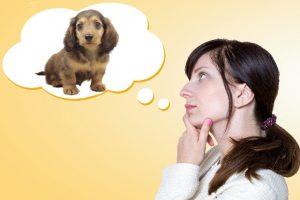 英語をイメージで覚える Dogと聞いたら犬の絵が思い浮かぶ状態