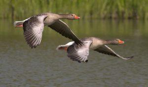 2羽の鳥 英語のスピーキング練習は一石二鳥